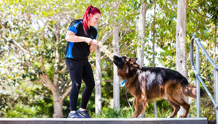 Sarah is a senior dog trainer