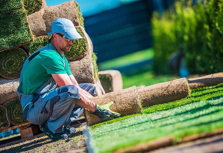 man rolling down sod for landscaping business